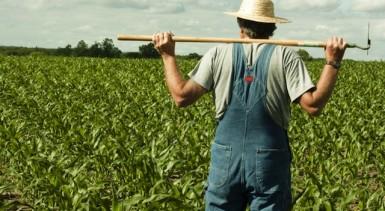 farmer-19050