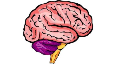 brain-illustration-photo-226883-s-1280x782